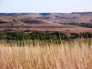 This is the Konza prairie, which is only 10 miles south of town.